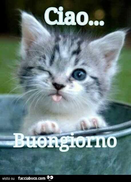 Il Gattino Che Fa L Occhiolino E La Linguaccia Ciao