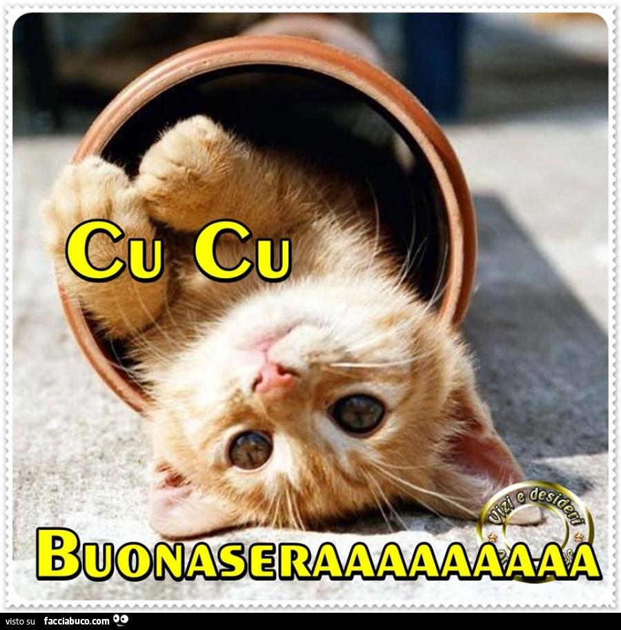 Cu Cu Buonasera Gatto Nel Tubo Facciabucocom