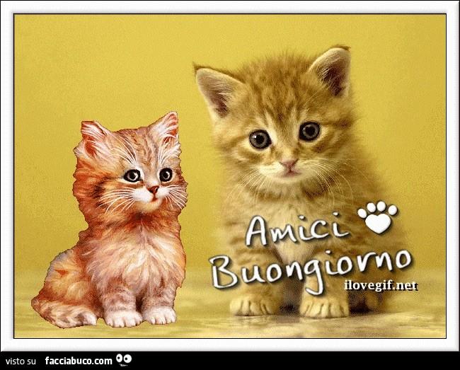 Amici buongiorno dal gattino for Buongiorno con gattini