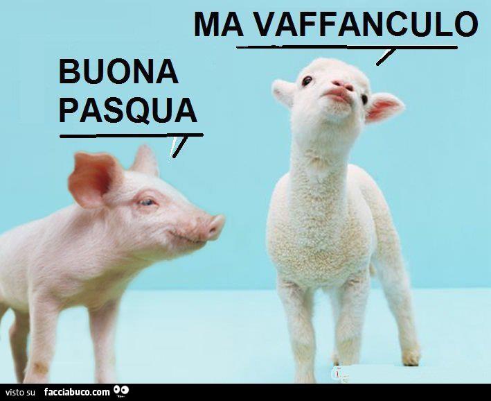 https://cdn-img-a.facciabuco.com/177/n1x3v574t5-maialino-buona-pasqua-agnellino-ma-vaffanculo_b.jpg