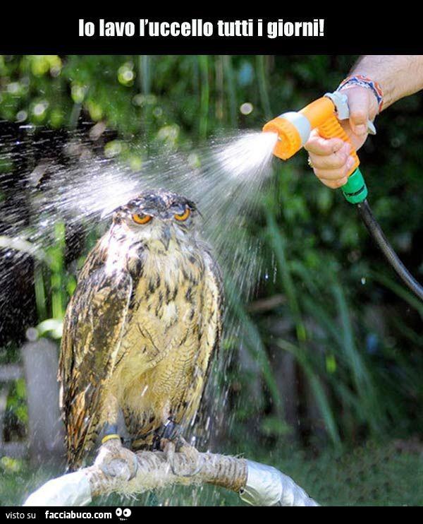 Io lavo l\'uccello tutti i giorni condiviso da zulu56 - Facciabuco.com