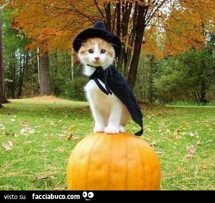Il Gatto Con Il Cappello Da Strega E Il Mantello Facciabucocom