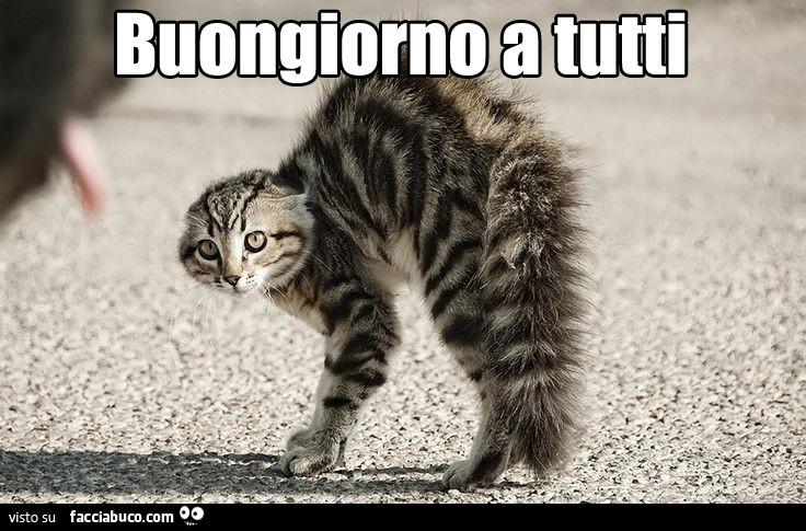 Gatto Arrabbiato Buongiorno A Tutti Facciabucocom